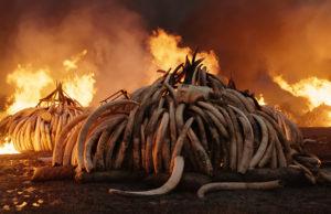 Anthropocene, movie, image,