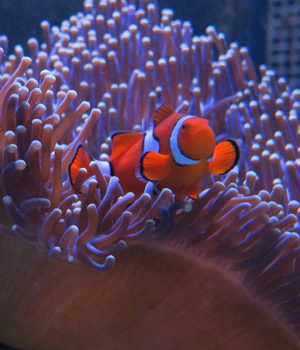 Production still from David Attenborough's Great Barrier Reef .